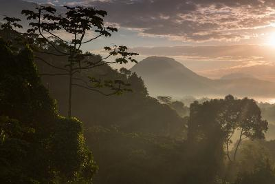 Serra Do Mar Forest in Sao Paulo State in Brazil-Alex Saberi-Photographic Print