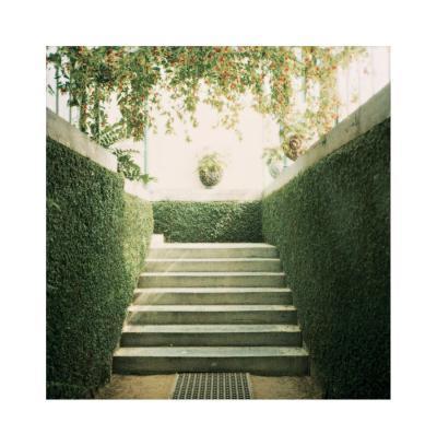 Serres 11, 2008-Alexandre Bibaut-Premium Giclee Print