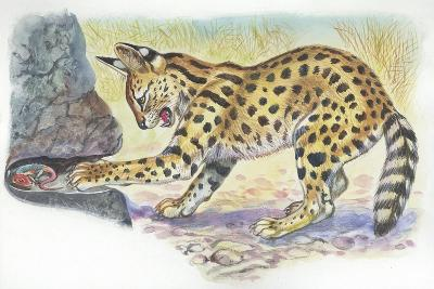 Serval Felis Serval Catching Reptile--Giclee Print