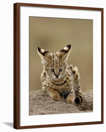 Serval (Felis Serval) Cub on Termite Mound, Masai Mara National Reserve, Kenya, East Africa-James Hager-Framed Photographic Print