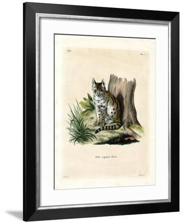 Serval--Framed Giclee Print