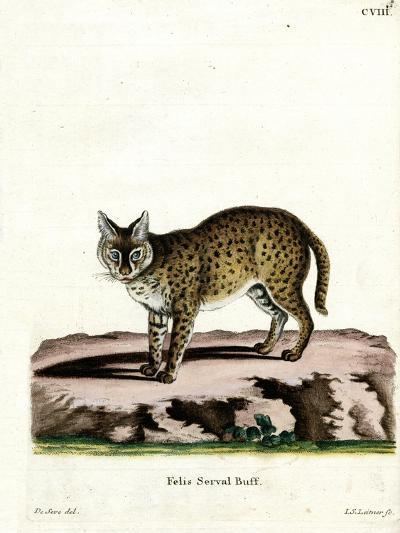Serval--Giclee Print