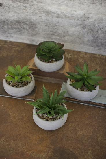 Set of Four Artificial Succulents in Low Round Cement Pots--Home Accessories