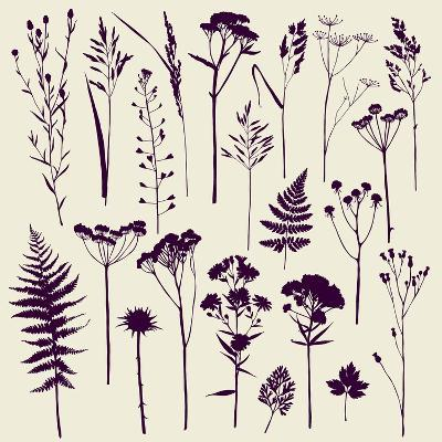 Set of Illustrations of Plants. Herbarium. Silhouettes. Sketch. Freehand Drawing.- xenia_ok-Art Print