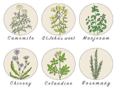 Set of Spices, Medicinal Herbs and Officinale Healing Plants Icons. Hand Drawn Illustrations. Botan- HappiestSimm-Art Print