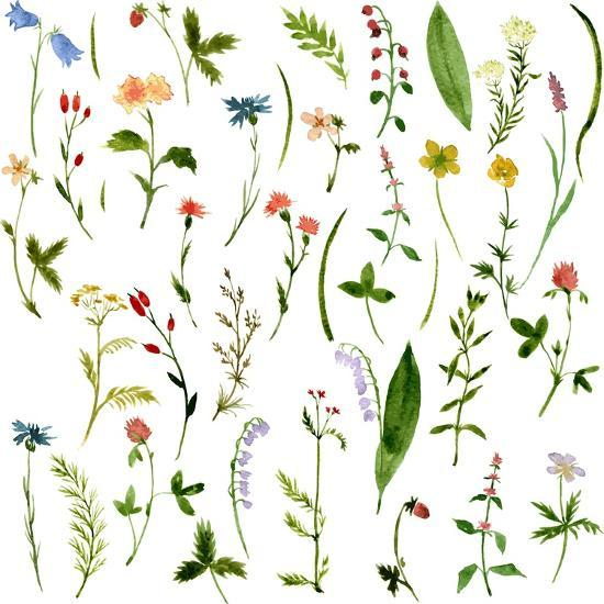 Set of Watercolor Drawing Herbs and Flowers-cat_arch_angel-Art Print