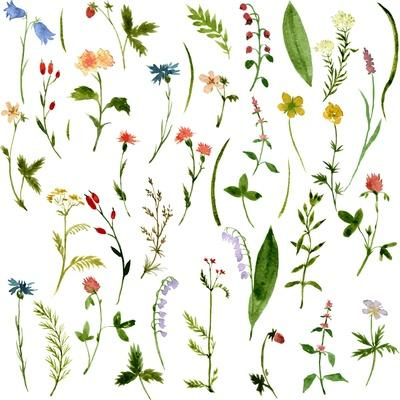 https://imgc.artprintimages.com/img/print/set-of-watercolor-drawing-herbs-and-flowers_u-l-pwhjrj0.jpg?p=0