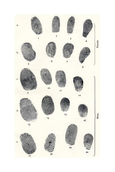 Sets of Fingerprints-Sheila Terry-Giclee Print