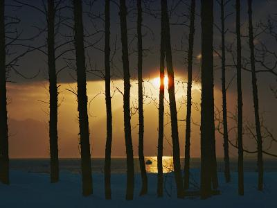 Setting Sun Seen Through a Grove of Trees-Steve Raymer-Photographic Print