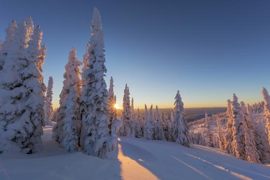 Setting sun through forest of snow ghosts at Whitefish, Montana, USA-Chuck Haney-Premium Photographic Print