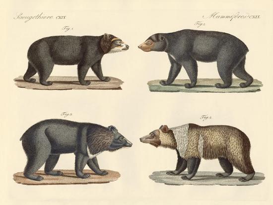 Several Bears Found--Giclee Print