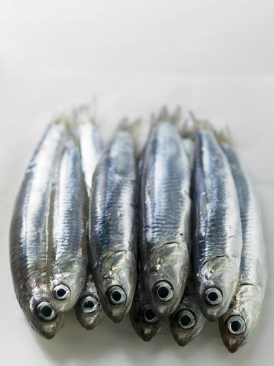 Several Fresh Anchovies--Photographic Print