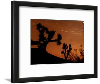 Several Leonids Meteors are Seen Streaking Through the Sky Over Joshua Tree National Park, Calif.