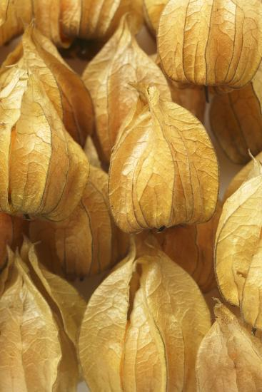 Several Physalis with Calyxes (Close-Up)-Foodcollection-Photographic Print