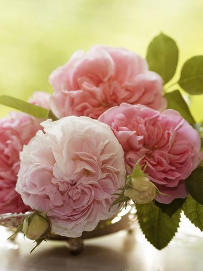 Shabby Roses Flower Floral Vintage 2-Grab My Art-Art Print