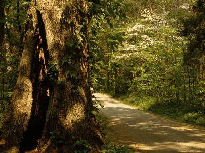 Shade-Dappled Dirt Road Through Lush Forest-Raymond Gehman-Photographic Print