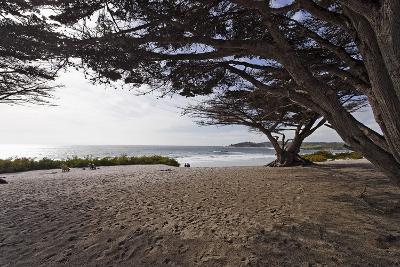 Shaded Beach, Carmel by the Sea, California-George Oze-Photographic Print
