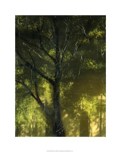 Shaded Reflection I-Jennifer Goldberger-Limited Edition