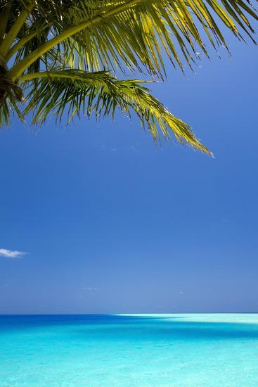 Shades of Blue and Palm Tree, Tropical Beach, Maldives, Indian Ocean, Asia-Sakis-Photographic Print