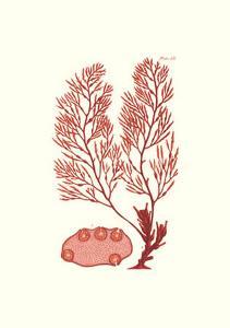 Shades of Coral II