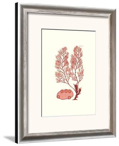 Shades of Coral II--Framed Art Print