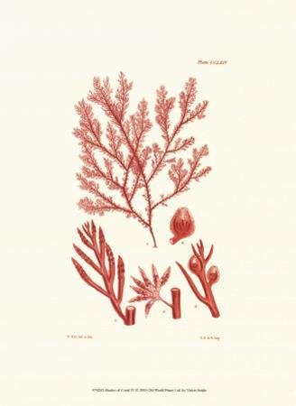 Shades of Coral IV