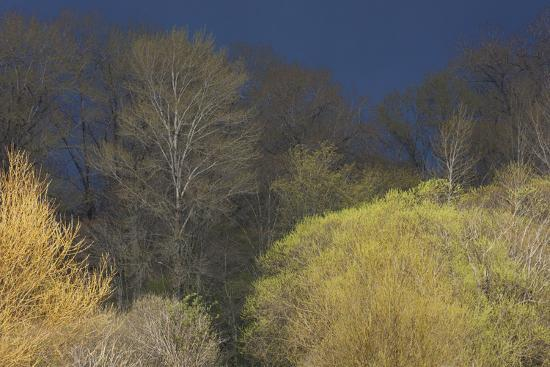 Shades of early Spring-Ken Archer-Premium Photographic Print