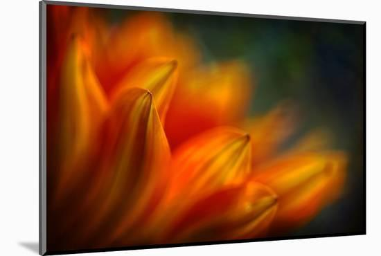 Shades of Orange-Ursula Abresch-Mounted Photographic Print