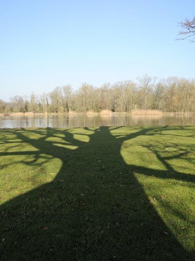 Shadow Cast by Large English Oak Tree (Quercus Robur) on Ornamental Lake, Corsham, England-Nick Upton-Photographic Print