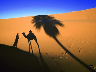 Shadow of Camel and Palm Tree-Martin Harvey-Photographic Print
