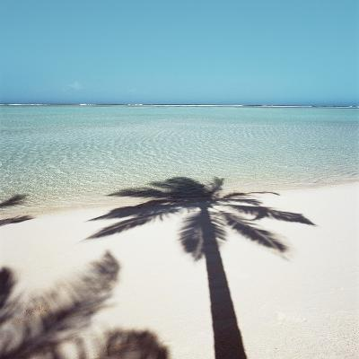 Shadow of Palm Tree on a Beach--Photographic Print