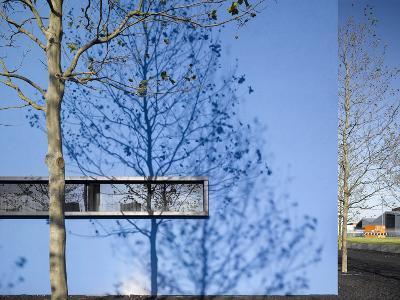 Shadow of Slim Trees on Blue Wall-Daniel Hopkinson-Photographic Print