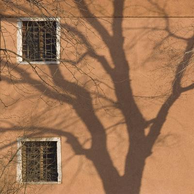 Shadow of Tree on Orange Venice Building Exterior-Mike Burton-Photographic Print