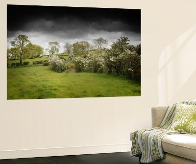 Shadow on the Green-Philippe Sainte-Laudy-Wall Mural