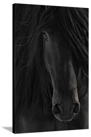 Shadow--Stretched Canvas Print