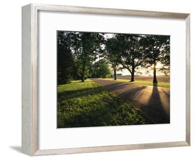 Shadows on a Rural Tree-Lined Road-Medford Taylor-Framed Photographic Print