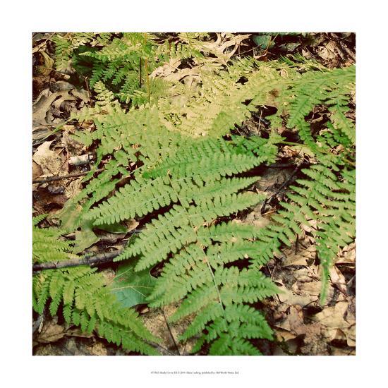 Shady Grove III-Alicia Ludwig-Art Print
