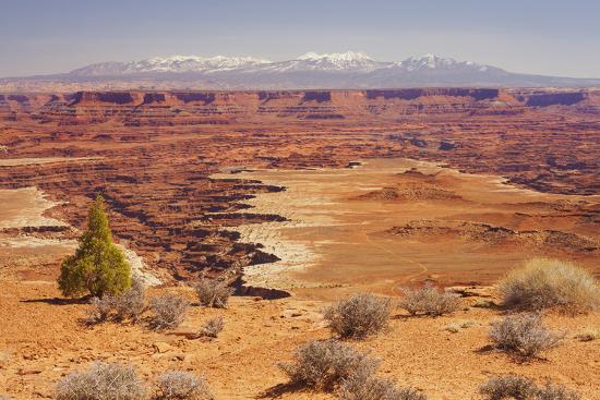 Shafer Trail Overlook, Canyonlands National Park, La Sal Mountains, Utah, Usa-Rainer Mirau-Photographic Print