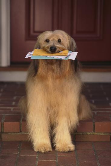 Shaggy Dog Fetching the Mail-DLILLC-Photographic Print