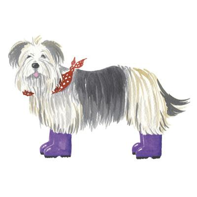 shaggy dog ii giclee print by kate mawdsley artcom