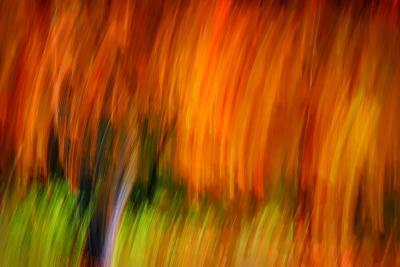 Shaggy Fall-Ursula Abresch-Photographic Print
