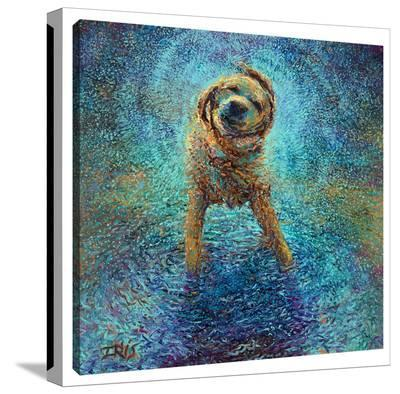 Shakin' Off The Blues-Iris Scott-Gallery Wrapped Canvas