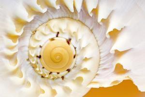 Sea Shell Abst No.4 by Shams Rasheed