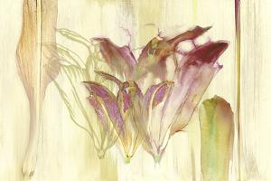 Efflorescence by Shams-Saba