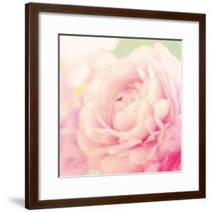 Bloom by Shana Rae