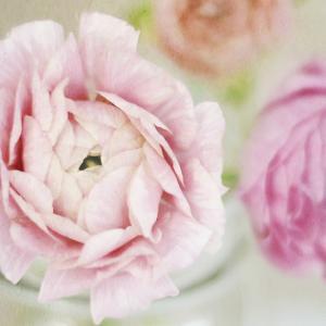 Bouquet I by Shana Rae