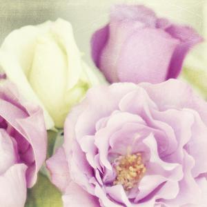 Bouquet II by Shana Rae