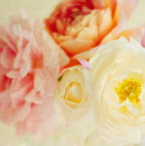 Bouquet III by Shana Rae
