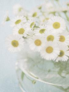 Candy Flowers I by Shana Rae