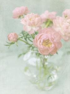 Candy Flowers II by Shana Rae
